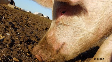Sparking grassroots movement to end the misery of farm animals