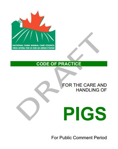 Code Practice Pigs