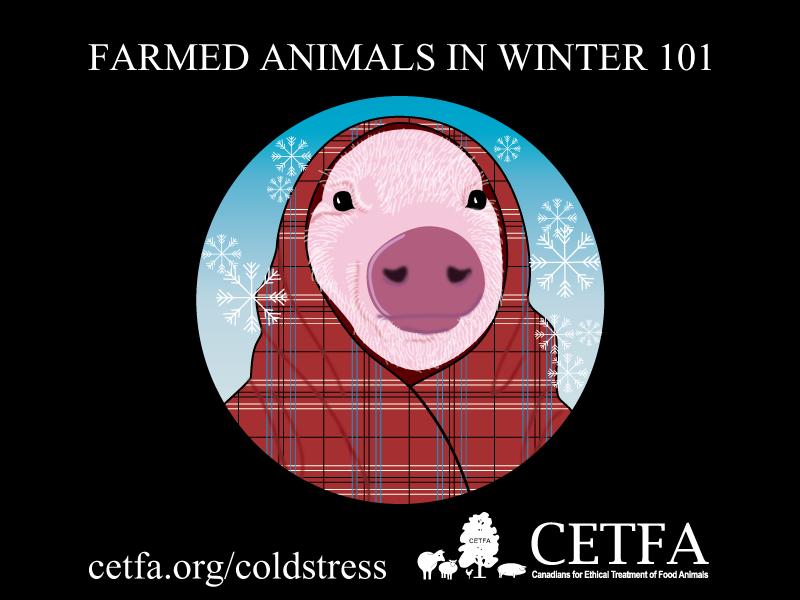 Farmd-Animals-in-Winter-101