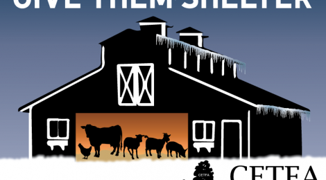 HELPING FARMED ANIMALS IN COLD WEATHER - Part I: On Farms