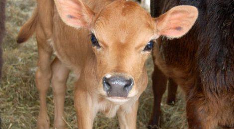 Québec envisage de changer le statut des animaux de «biens meubles» à êtres «doués de sensibilité»