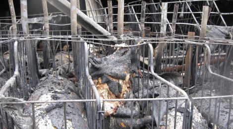 Take Action to End Barn Fires in Canada