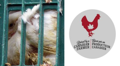 """Raised by a Canadian Farmer"" Does Not Mean Humanely Raised"