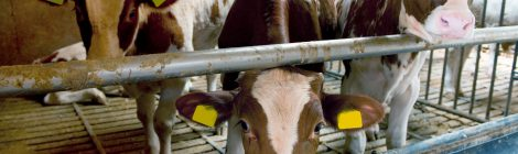 Canada is About to Repeal and Replace its Federal Slaughter Regulations - What You Can Do