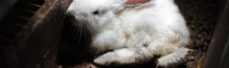 Get Rabbits Out Of Battery-Cages