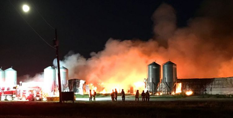 Pig Barn Fire in Area of P.E.D. Outbreak Raises Questions