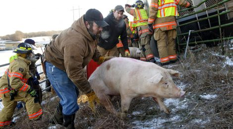 Help Prevent Livestock Trailer Accidents