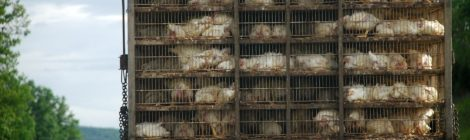 OIE Review Finds Problems with Canada's Veterinary Services, CFIA