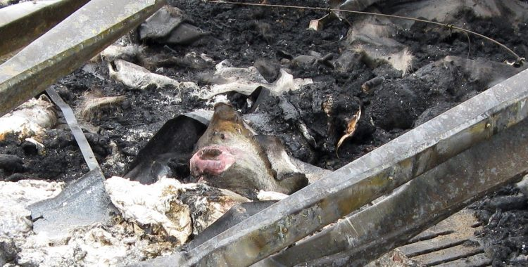 New petition to protect animals from barn fires in Quebec