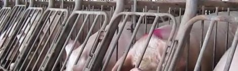 Say No to Ag Gag Legislation in Manitoba